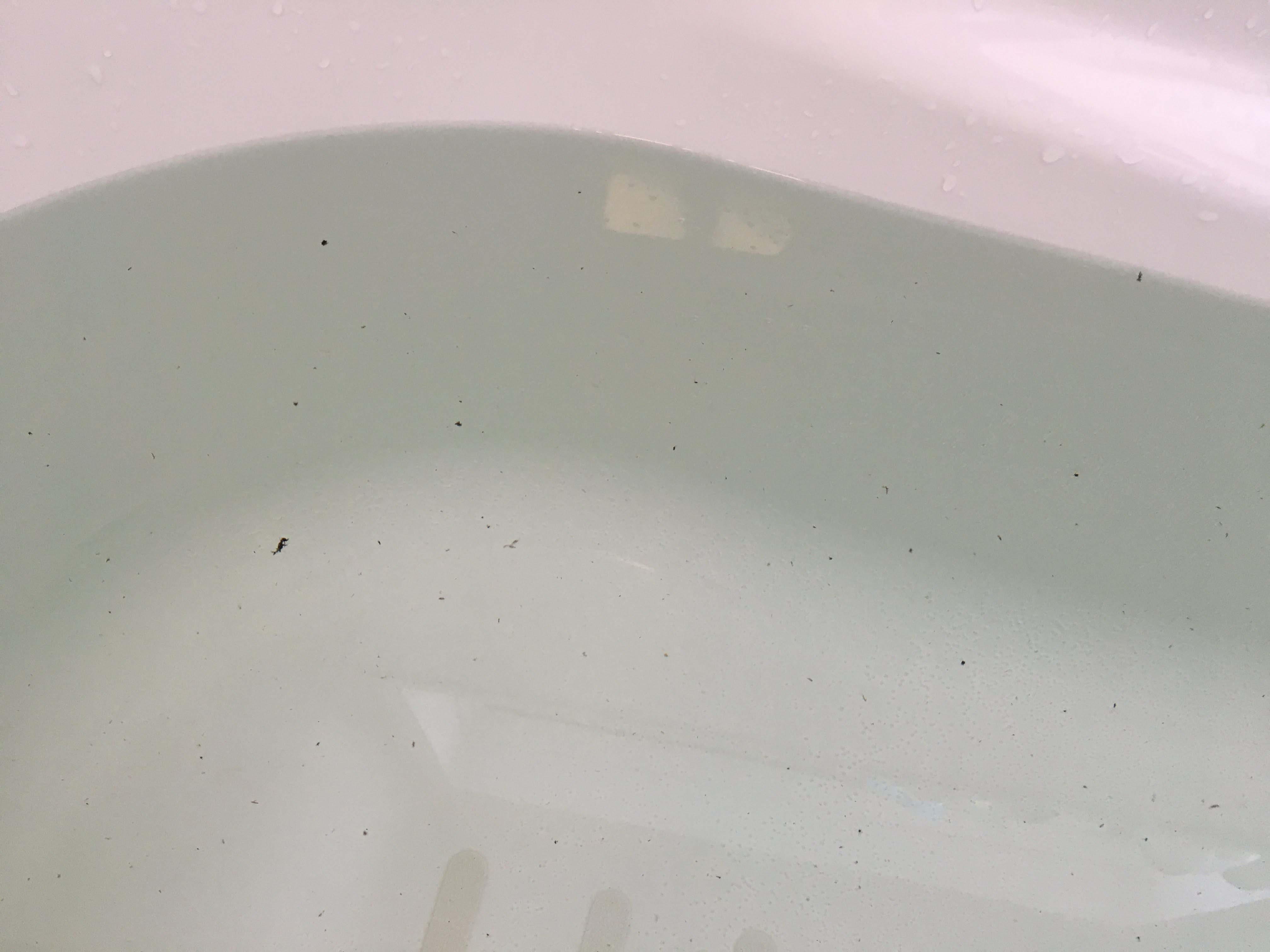井戸水使用!お湯を張るたびにワカメのようなものが出てくる